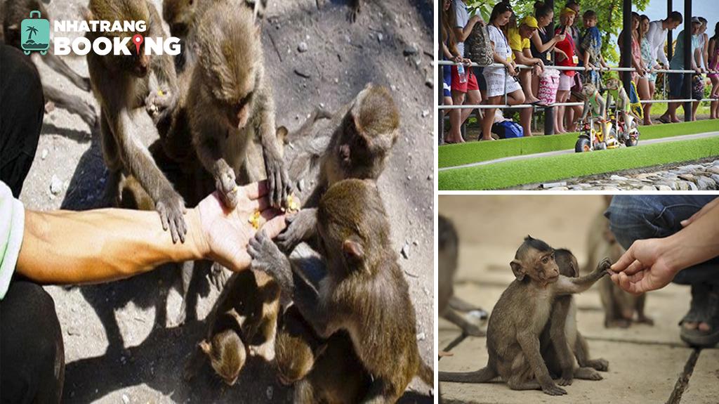 Đảo khỉ (hòn lao) nha trang - vương quốc của các loài khỉ